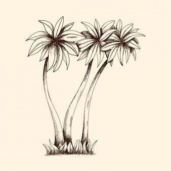 Wektorowy wizerunek tropikalni drzewka palmowe z gęstą koroną i trawą.
