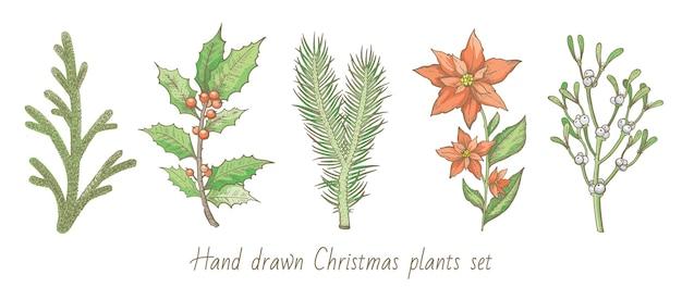 Wesołych świąt bożego narodzenia zestaw roślin. choinka, sosna, ostrokrzew, zimowa jemioła, kwiat poinsecji.