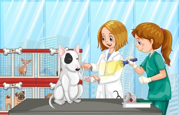 Weterynarz pomaga psu w klinice