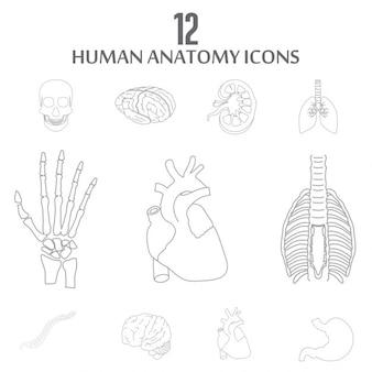 Wewnętrzne narządy ludzkie zestaw ikon outline