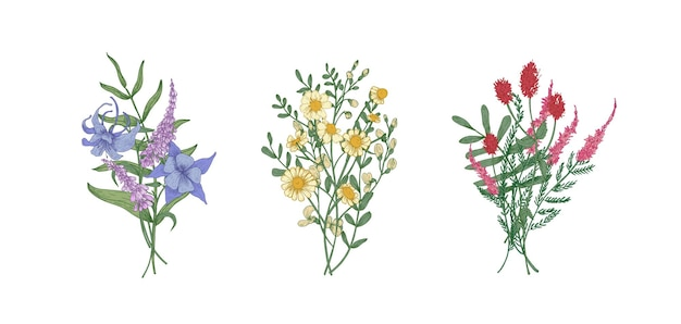 Wiązka bukietów przepięknych kwiatów łąkowych i roślin zielnych