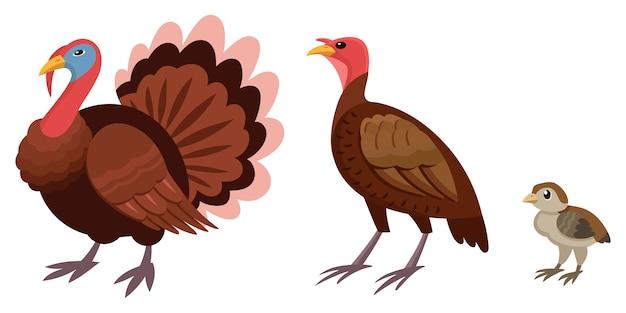 Widok z boku rodziny turcji. ptaki hodowlane różnej płci i wieku.
