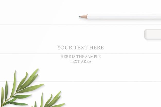 Widok z góry elegancka biała kompozycja ołówków gumka i liść estragonu na tle drewnianej podłogi.