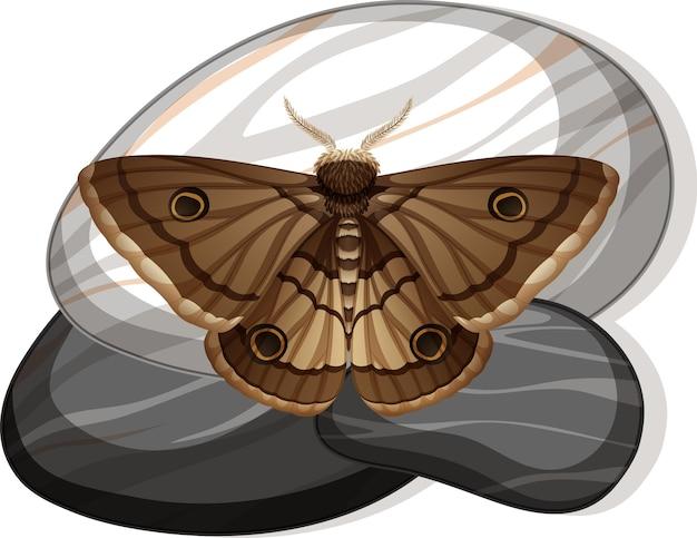 Widok z góry motyla na kamieniu na białym tle