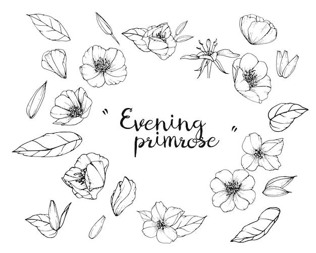 Wieczorny wiesiołek i rysunki kwiatowe. archiwalne ręcznie rysowane ilustracje botaniczne. vec