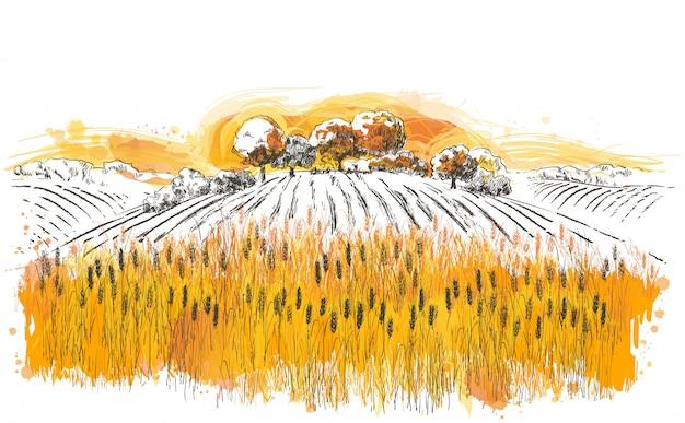 Wiejski krajobraz lato pole dojrzałej pszenicy na wzgórzach i dolinach w tle.