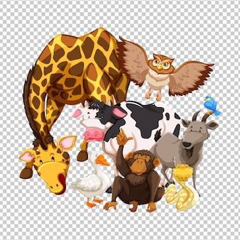 Wiele dzikich zwierząt na przezroczystym tle