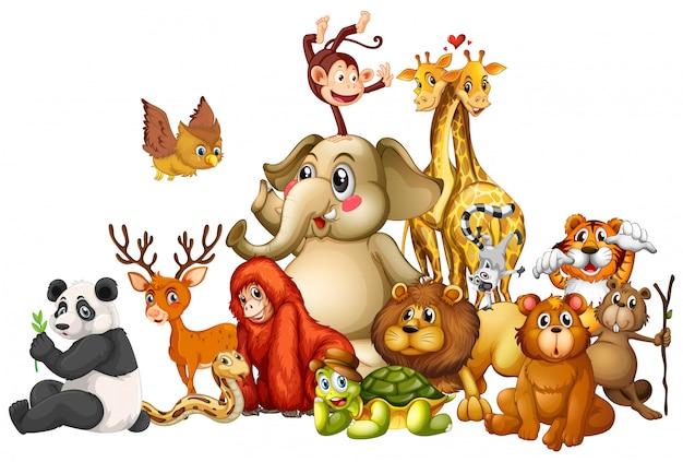 Wiele zwierząt na białym tle