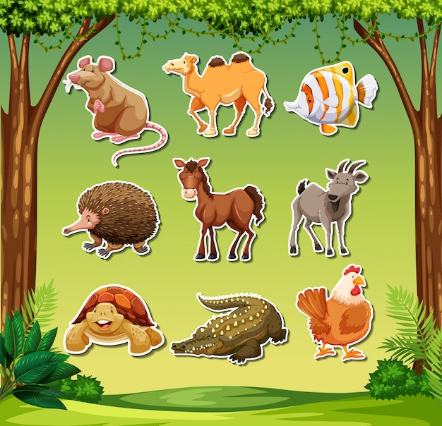 Wiele zwierząt w tle dżungli