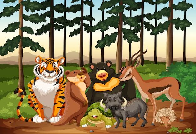 Wiele zwierząt żyjących w dżungli