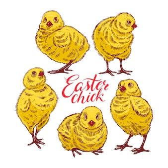 Wielkanocne kurczaczki. zestaw ślicznych kolorowych piskląt. ręcznie rysowane ilustracji