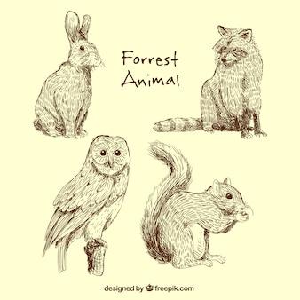 Wielki zbiór zwierząt leśnych
