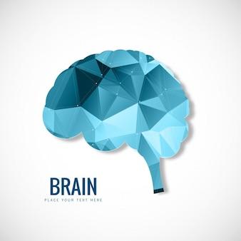 Wielokątne mózg