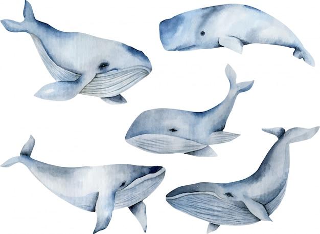 Wieloryby akwarelowe, kolekcja ręcznie malowana