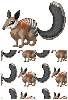 Wiewiórka na białym tle