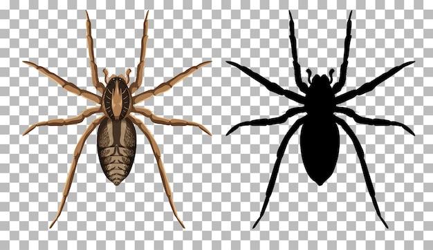 Wilczy pająk z jego sylwetka na przezroczystym tle