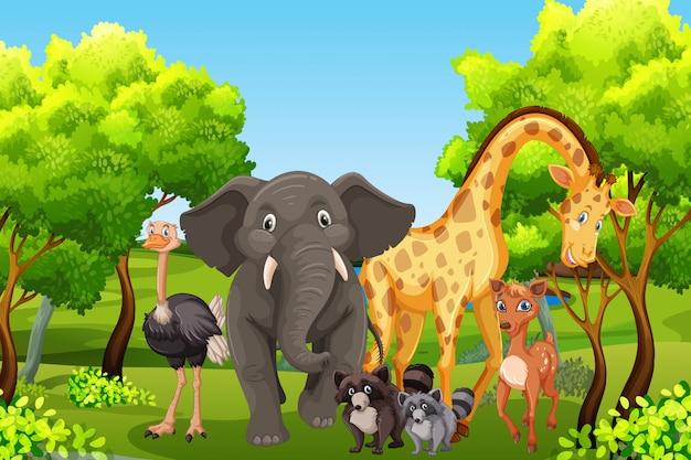 Wild zwierzę w naturze