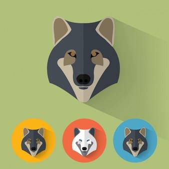 Wilk projektuje kolekcję