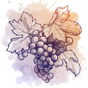 Winogrona grono z liśćmi. rysunek liniowy na tle akwareli teksturowanej