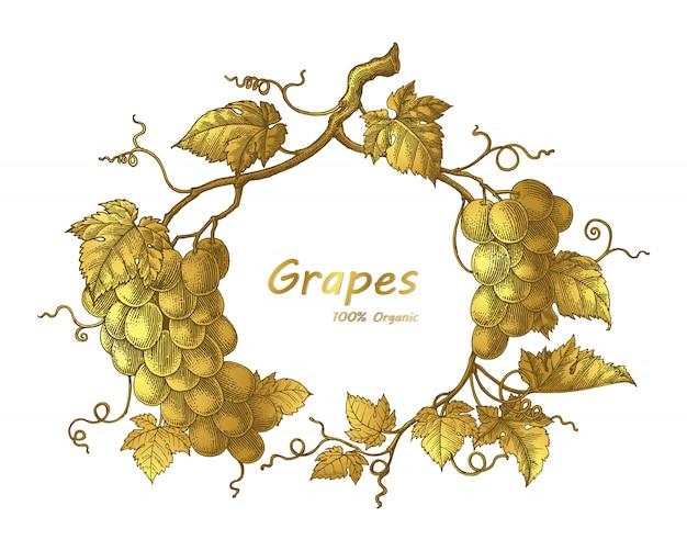Winogrona rama ręcznie rysunek vintage grawerowanie ilustracja w kolorze złota