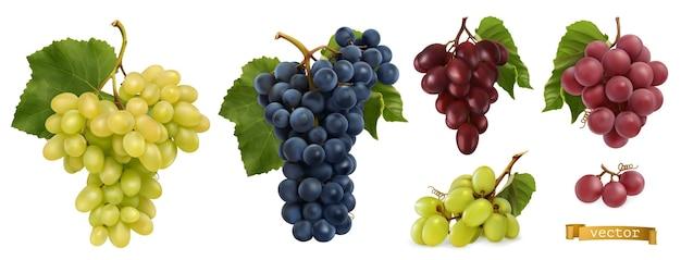 Winogrona winne, winogrona stołowe. świeże owoce, 3d realistyczny wektor zestaw