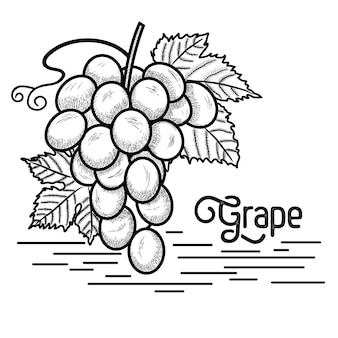 Winogrono w stylu vintage
