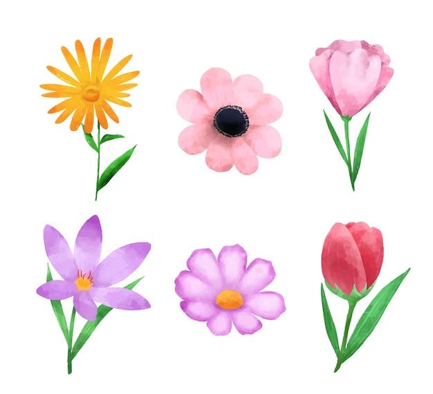 Wiosenna kolekcja kwiatów