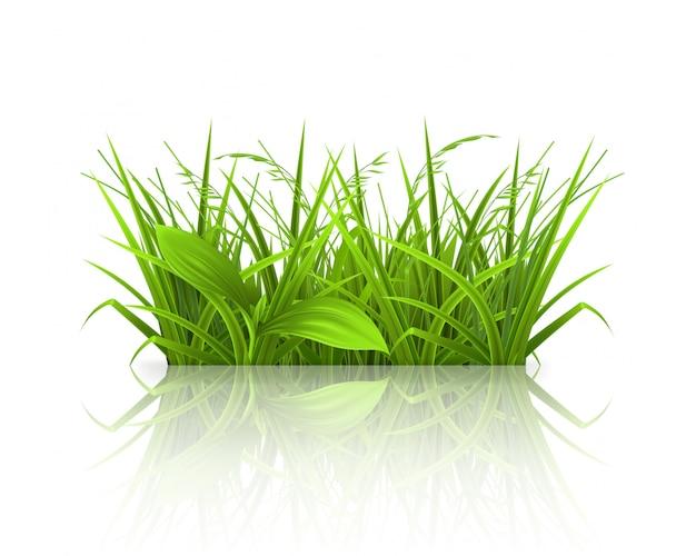 Wiosenna trawa, czas letni, realistyczne