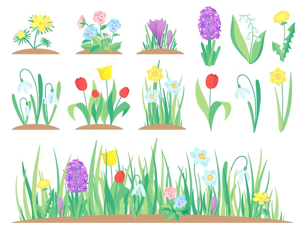 Wiosenne kwiaty, ogród tulipan kwiat, wczesne rośliny kwiatowe i tulipany roślin ogrodnictwo na białym tle zestaw