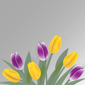 Wiosenne kwiaty tulipanów na białym tle