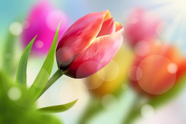 Wiosenne kwiaty, tulipany i promienie słoneczne