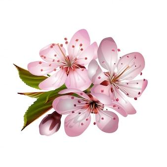 Wiosenne różowe kwiaty sakury