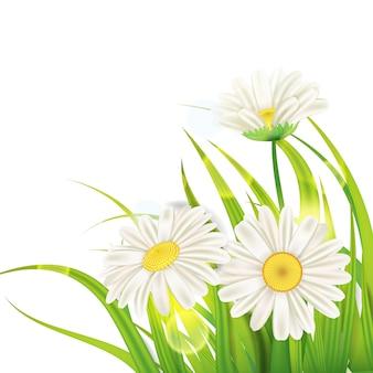 Wiosenne stokrotki tło świeża zielona trawa, przyjemne soczyste wiosenne kolory