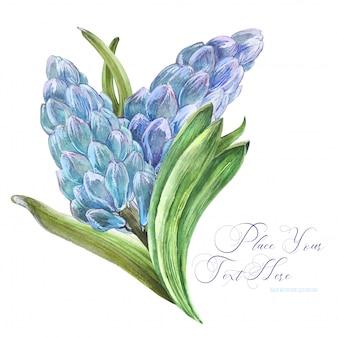 Wiosenny bukiet akwarela z kwiatami hiacyntu