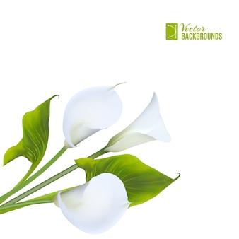 Wiosenny bukiet lilii calla na białym tle