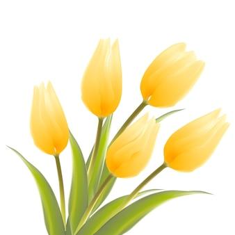 Wiosenny bukiet tulipanów na białym tle