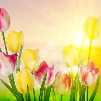 Wiosna piękna tulipany kwiat.
