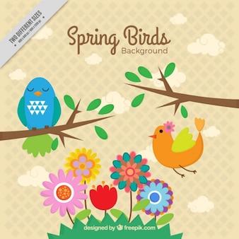 Wiosną ptaki tle