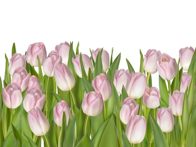 Wiosna tulipany odizolowywający na bielu.