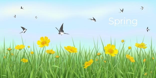 Wiosna z żółtymi kwiatami trawy i wirującymi jaskółkami