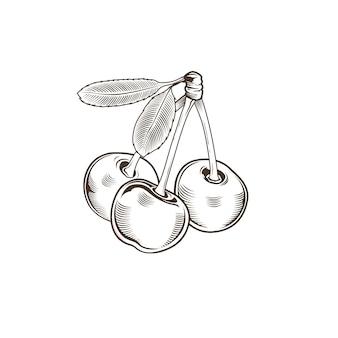 Wiśnia w stylu vintage. ilustracja sztuki linii