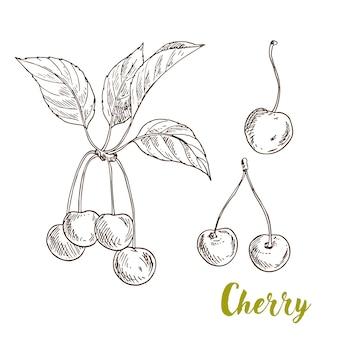 Wiśnie z liśćmi ilustracyjnymi