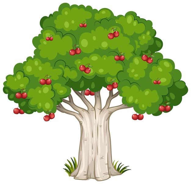 Wiśniowe drzewo na białym tle