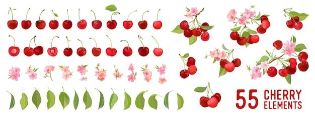 Wiśniowe owoce jagodowe, kwiaty, liście wektor ilustracja elementu akwarela. zestaw całych, pokrojonych na pół, pokrojonych na kawałki świeżych jagód na białym tle. wibrująca soczysta kolekcja botaniczna