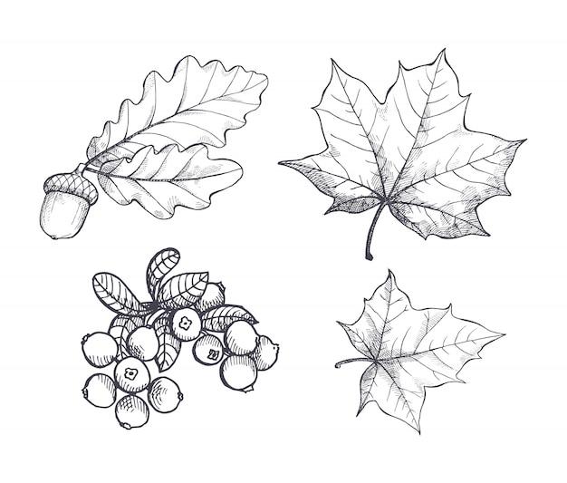 Wiszący zestaw z liści klonu i jesiennego żołędzia