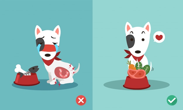 Właściwe i złe sposoby karmienia psów, ilustracja