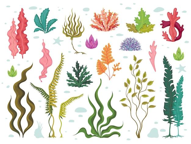 Wodorosty. morskie podwodne rośliny, oceaniczna rafa koralowa i wodorosty, ręcznie rysowane zestaw flory morskiej