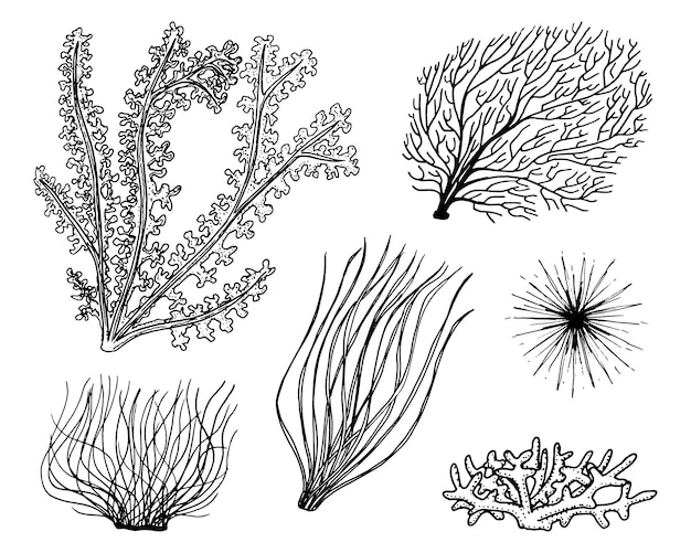 Wodorosty roślin morskich. życie roślinne i pokarm dla ryb. grawerowane ręcznie rysowane w starym szkicu, styl vintage. morskie lub morskie, potwory lub ryby. zwierzęta w oceanie.
