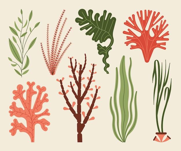 Wodorosty zestaw ilustracji na białym tle. rośliny morskie i wodne algi morskie.