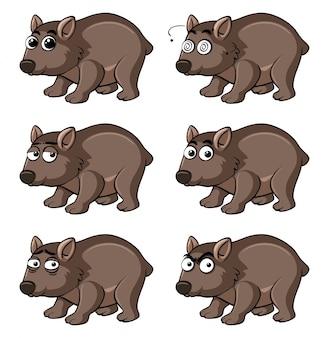 Wombat z różnymi emocjami